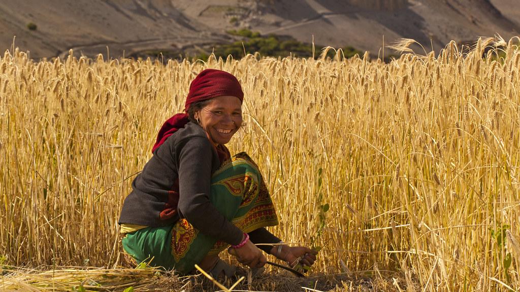 Himalaya Harvest
