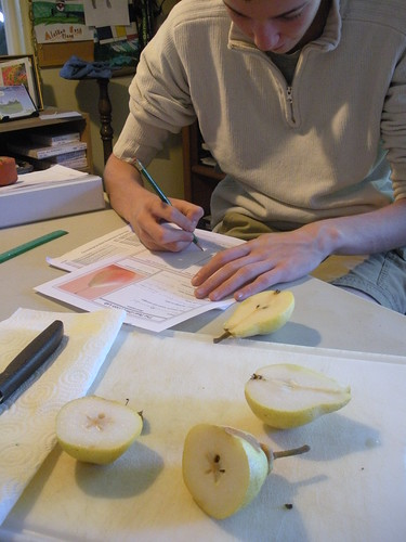 Pear study - Dissection and observations