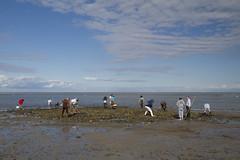 20111003 - Fall Shellfishing 2011