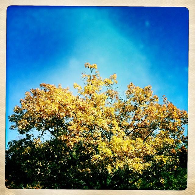 Oak Tree and Blue Sky