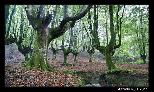 Bosque de Oltzarreta