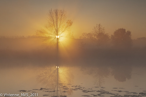 mist fog sunrise illinois preserves lakecounty foggyscenes halfdayforestpreserve halfdaypond