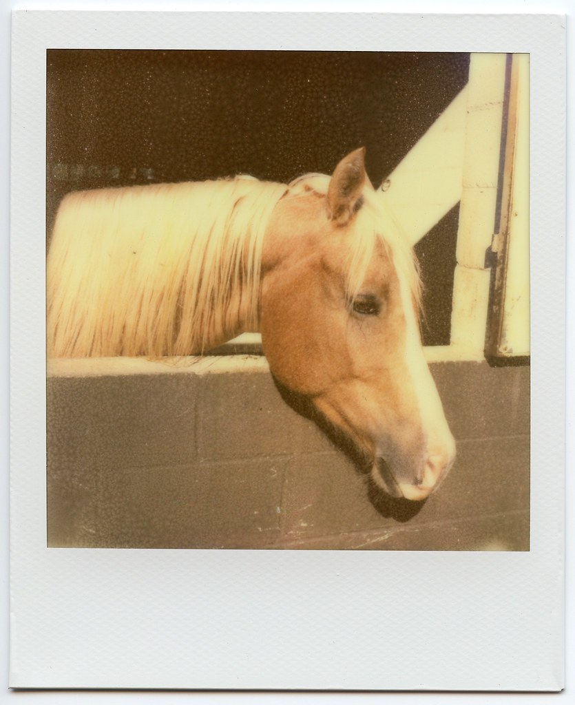 SX-70 - TIP PX70 Color Shade - 2011-10-15 A