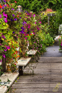 Boardwalk with flowers