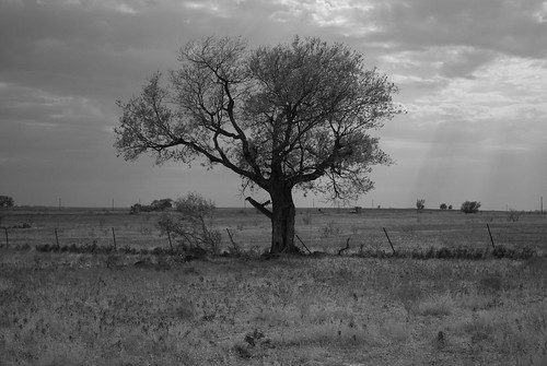 blackandwhite tree landscape texas