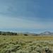 Small photo of Prairie
