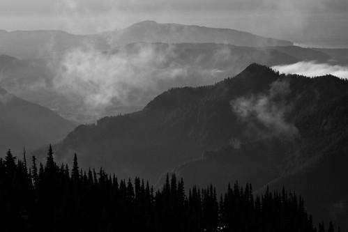 bw mountains tree fog landscape olympicnationalpark blackandwite stunningphotogpin