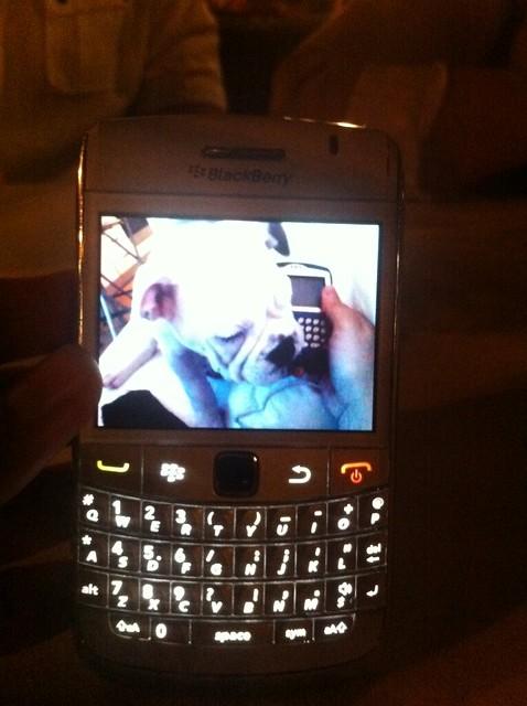 Blackberry Farm Dog Rescue