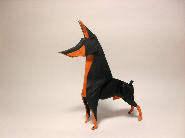 Doberman Pinscher - Alpha