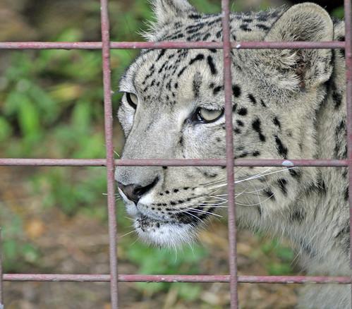animals endangered