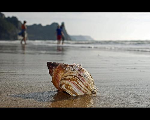 macro dof bokeh shell gower oxwich lantrophotography