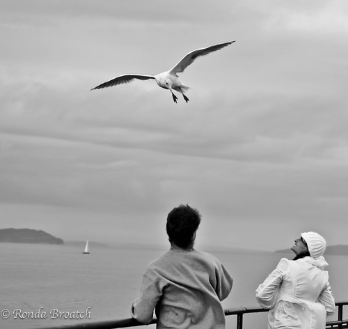 Feeding the seagull - Kingston/Edmonds ferry