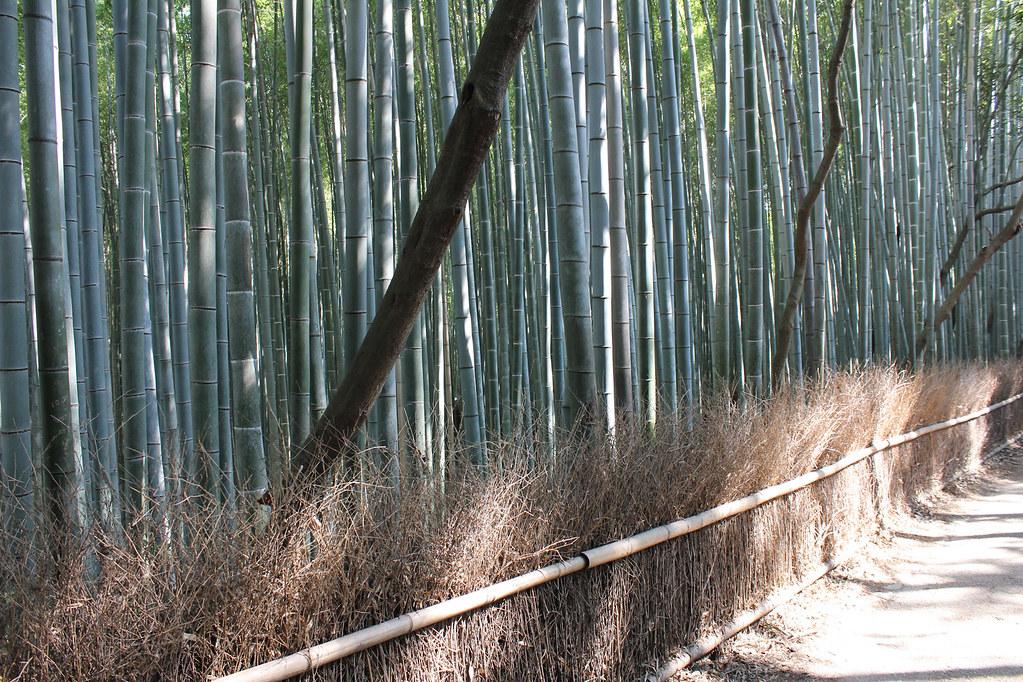 Arashiyama, Bambuswälder-27