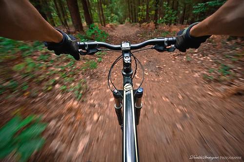 Forestbike