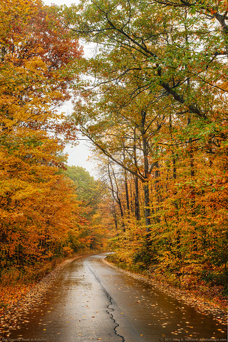 road autumn autumnfoliage trees fall leaves landscape maine newengland autumnleaves canopy ruralroad fallseason autumnroad fallcanopy