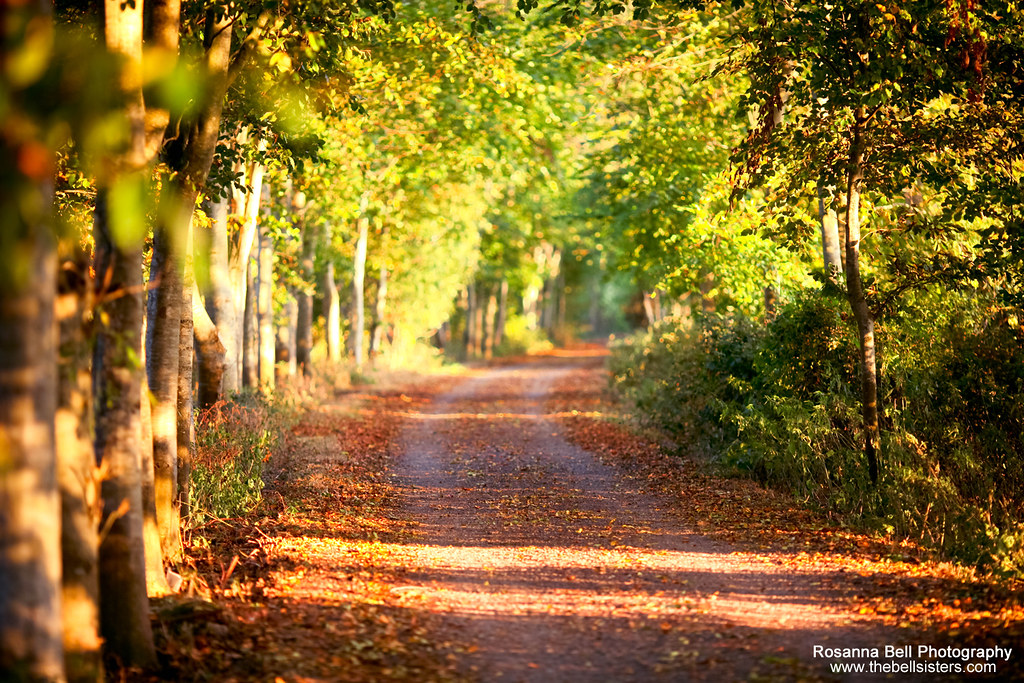 The Road to Autumn - Day 279/365