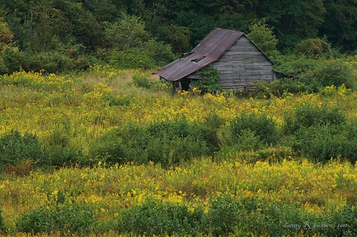 "usa field yellow barn canon landscape rebel nc niceshot farm ngc goldenrod ashe ""old 2011 county"" ""canon ""north carolina"" ""project xti"" 365"" flickraward barn"" mygearandme mygearandmepremium mygearandmebronze mygearandmesilver ringexcellence blinkagain 28mm135mm"" ""ashe flickrstruereflection1 rememberthatmomentlevel1"