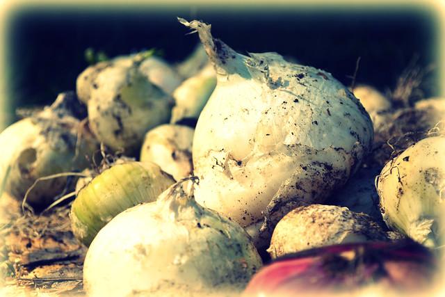 Annie's Onions