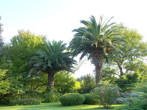 Le forum des fous de palmiers e espagne jardin de jon for Amenagement jardin avec palmier