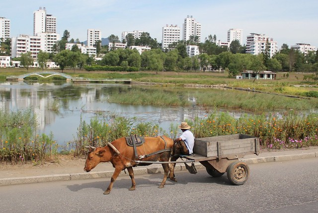 Ox Cart in Nampo North Korea