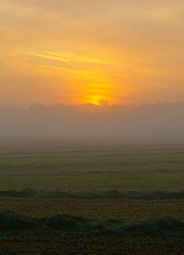 mist sunrise dawn nebel heu 2011 mönchbruch