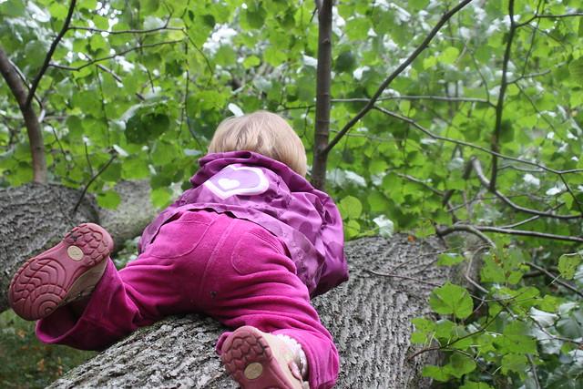 Auf die Bäume....