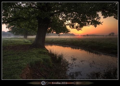 morning trees mist water field grass fog creek sunrise canon belgium belgique belgië erlend mechelen 60d hetbroek erroba robaye