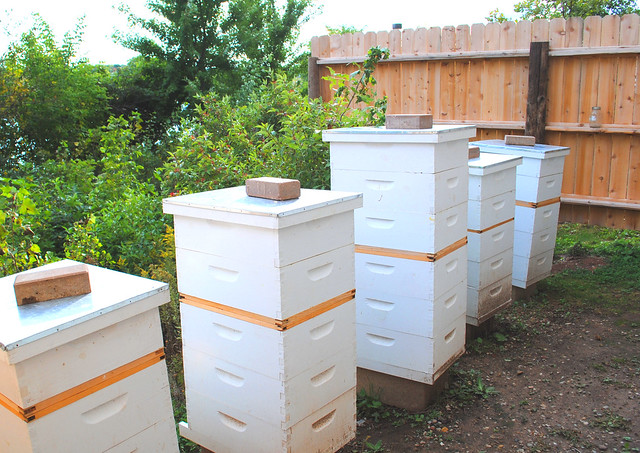 Man made bee hives resourceful by christine seeley flickr