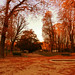 02/10/2011 (Canon EOS 500D)