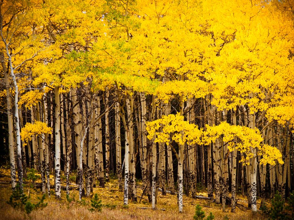Mount Evans Elk Management Area Colorado Tripcarta