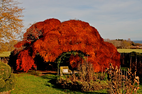 statepark park blue autumn red orange usa tree green fall yellow catchycolors garden landscape outside photo leaf interesting nikon flickr waterfront image shots outdoor connecticut country shoreline picture newengland ct places foliage scenes lonelytree gundersen conn harkness nikoncamera d5000 connecticutscenes nikond5000 bobgundersen robertgundersen
