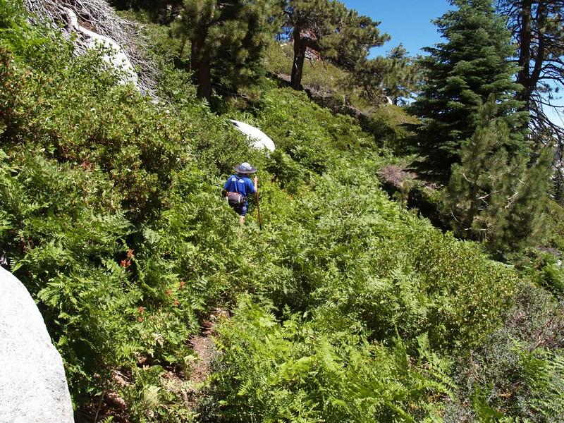 Hiking through the lush growth at Strawberry Cienega