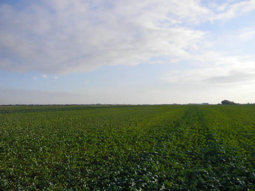 Through the cabbage field to the station.