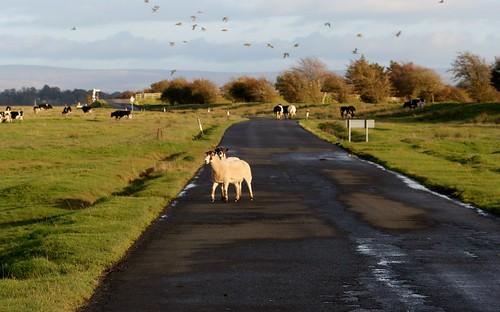 Traffic Hazard, Solway Firth