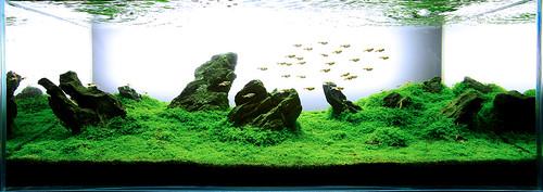 Green Aqua IAPLC2011 rank 80
