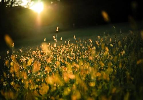between sundown and darkness