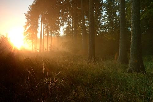 wood sun backlight forest sunrise landscape 09 landschaft sonne wald sonnenaufgang gegenlicht cokin stativ ndgrad 121s grauverlauf