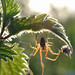 spider and nettle in sunlight