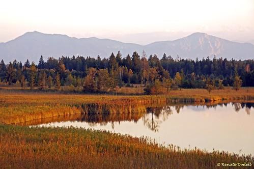 autumn mountain lake alps reflection tree berg forest landscape bayern bavaria see herbst seeshaupt landschaft wald spiegelung baum osterseen schilf gartensee dorenawm