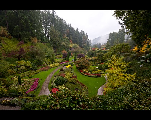 trees canada flower colors rain fog clouds garden landscape britishcolumbia victoria explore blooms sunken butchartgardens interestingness57 nikonafsnikkor1635mmf4gedvr