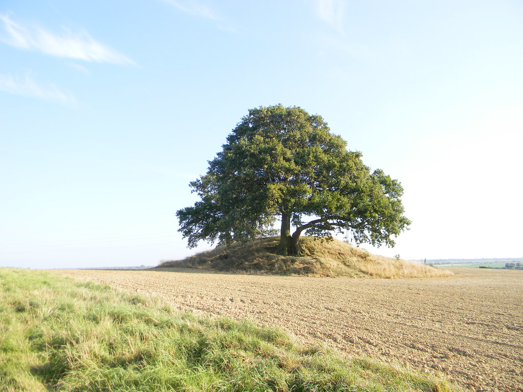 Tree on a mound (What passes for a hill in these parts). Ham Street to Appledore