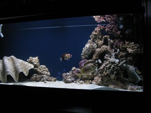 6163977505 f83388b9c1 for 20 gallon saltwater fish tank