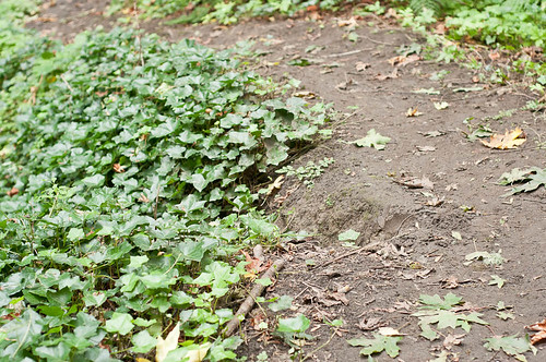 Notch in trail