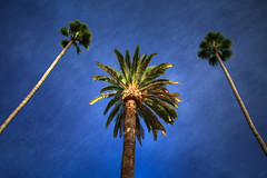 PalmTrees_3974_2_3_tonemapped.jpg