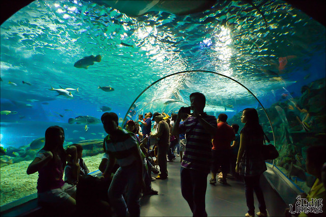 You searched for Manila Ocean Park Photo 1003 - One Stop Travel Guides ...