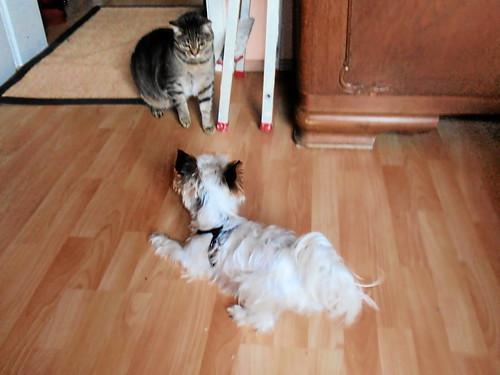 Hund will mit Kater Odin spielen