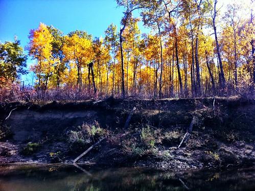 autumn camp canada nature yellow river photography winnipeg iphone whitemouth