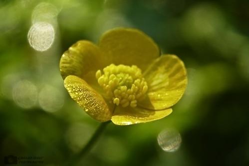 flower macro niceshot ionut cardan flickraward mblackice