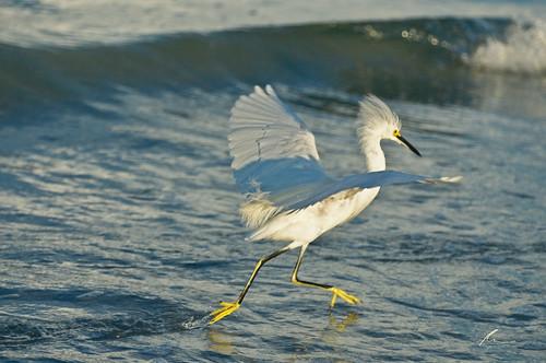 bird beach water ftdesoto mygearandme mygearandmepremium mygearandmebronze