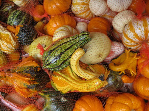 Autumn Gourds & Pumpkins